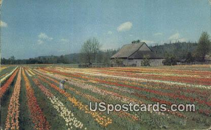 Puyallup Valley, WA Postcard      ;      Puyallup Valley, Washington