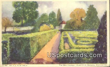 The Box Hedges - Lafayette, Washington WA Postcard