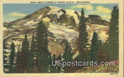 Wild Flowers - Mt Rainier, Washington WA Postcard