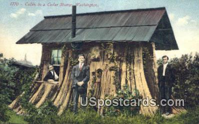 Cabin in a Cedar Stump - Misc, Washington WA Postcard