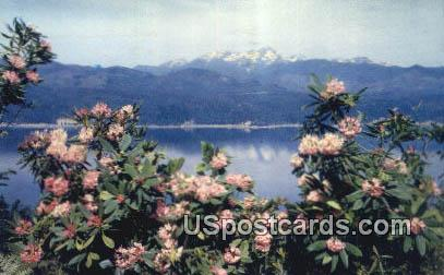 Rhododendrons - Hood Canal, Washington WA Postcard