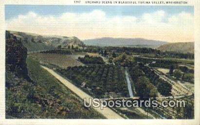 Orchard Scene - Yakima Valley, Washington WA Postcard