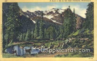 Band of Elk - High Olympics, Washington WA Postcard
