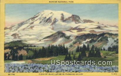 Field of Blue Lupine, Paradise Valley - Rainier National Park, Washington WA Postcard