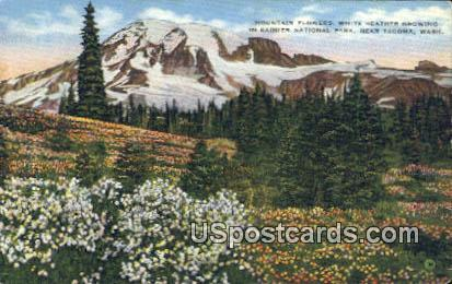 Mountain Flowers - Tacoma, Washington WA Postcard