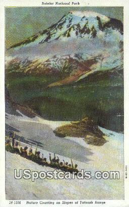 Nature Coasting - Rainier National Park, Washington WA Postcard