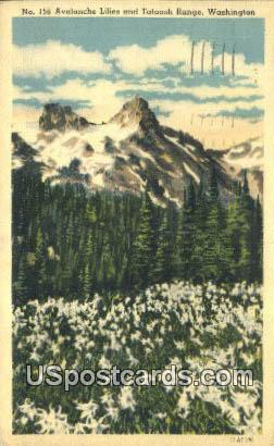 Avalanche Lilies - Tattosh Range, Washington WA Postcard