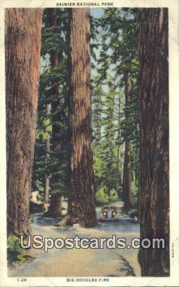 Big Douglas Firs - Rainier National Park, Washington WA Postcard