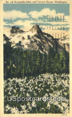 Avalanche Lilies - Tatoosh Range, Washington WA Postcard