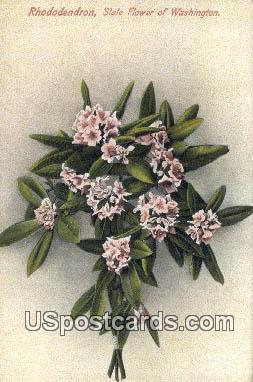 Rhododendron - State Flower, Washington WA Postcard