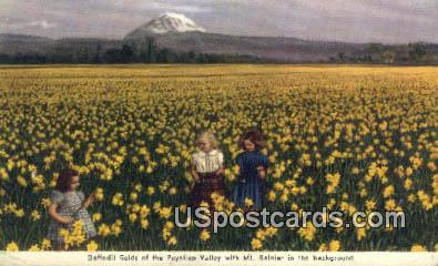 Daffodil - Mt Rainier, Washington WA Postcard