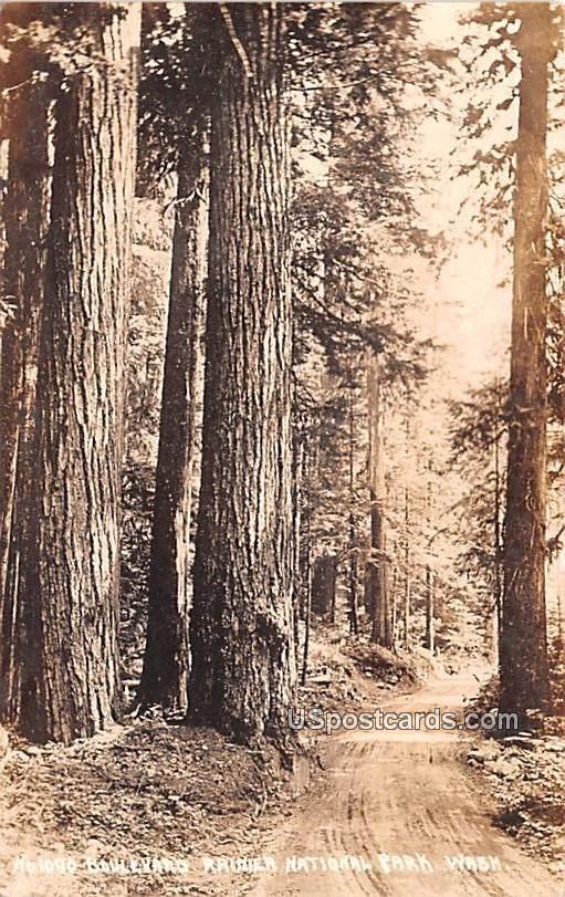 Hologo Boulevard - Rainier National Park, Washington WA Postcard