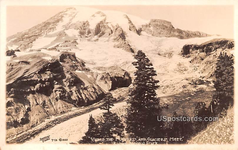 Flowers and Glaciers Meet - Rainier National Park, Washington WA Postcard