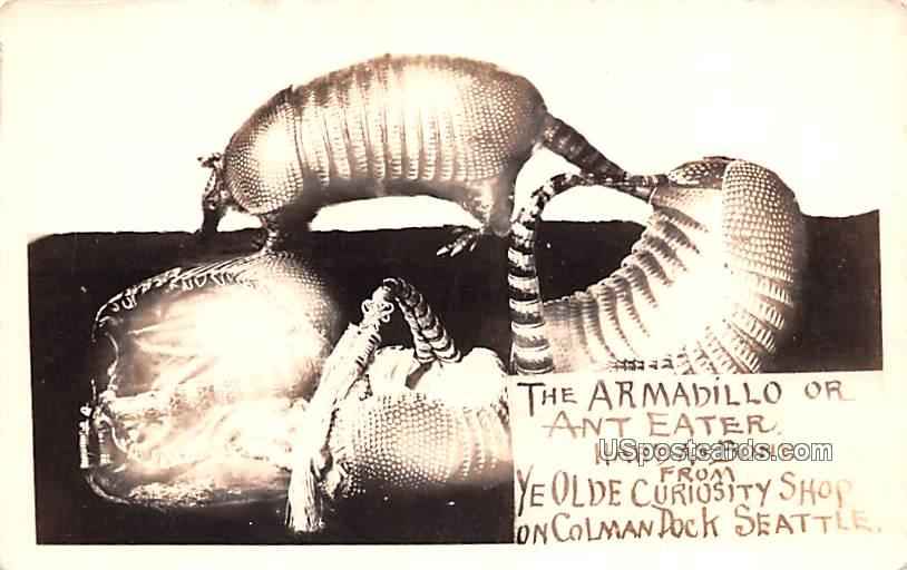 Armadillo or Ant Eater - Seattle, Washington WA Postcard