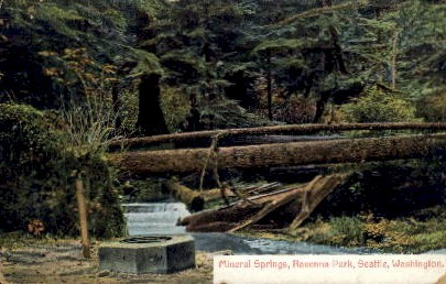 Mineral Springs, Ravenna Park - Seattle, Washington WA Postcard