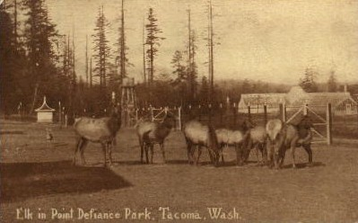 Elk in Point Defiance Park - Tacoma, Washington WA Postcard
