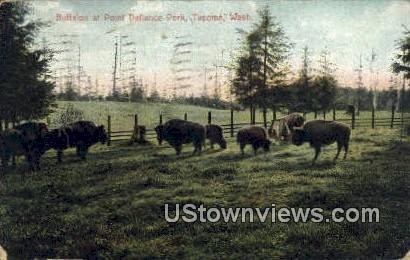 Buffalos, Point Defiance Park - Tacoma, Washington WA Postcard