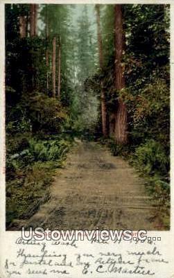 Forest Driveway - Tacoma, Washington WA Postcard