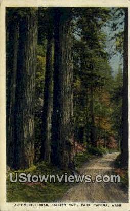 Automobile Road, Rainier National Park - Tacoma, Washington WA Postcard