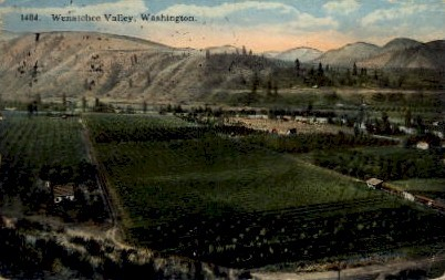 Wenatchee Valley - Washington WA Postcard