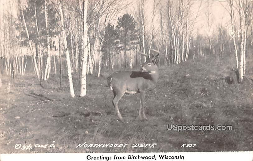 Northwoods Deer - Birchwood, Wisconsin WI Postcard