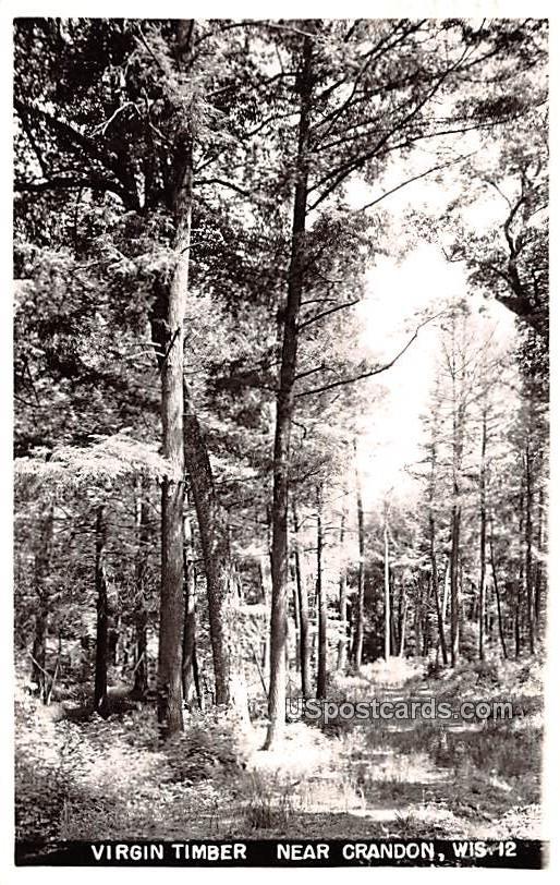 Virgin Timber - Crandon, Wisconsin WI Postcard