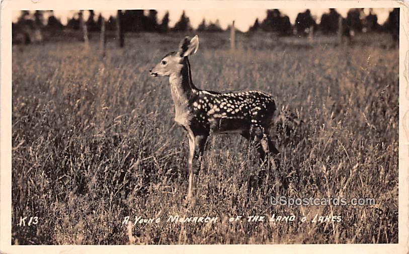 Young Monarch - Lake O Lakes, Wisconsin WI Postcard