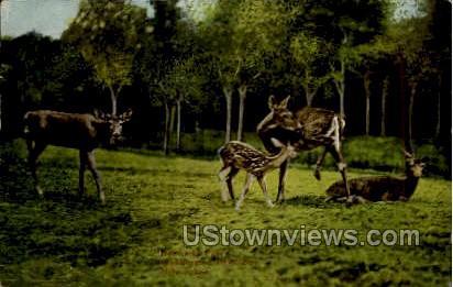 Washington Park Zoo - MIlwaukee, Wisconsin WI Postcard