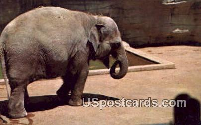Baby Elephants, Washington Park Zoo - MIlwaukee, Wisconsin WI Postcard