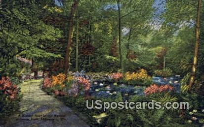 Ravine, Grant Park - MIlwaukee, Wisconsin WI Postcard