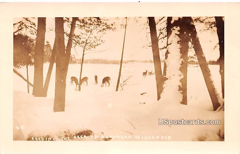 Feeding the Deer - Northern Wisconsin Postcards, Wisconsin WI Postcard