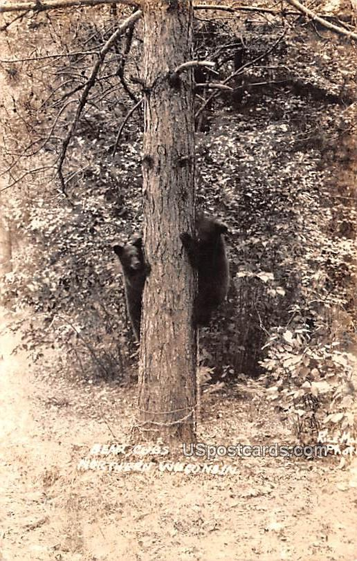 Bear Cubs - Northern Wisconsin Postcards, Wisconsin WI Postcard