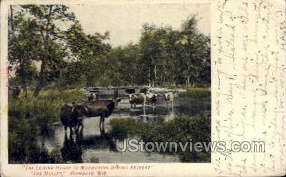 The Lowing Herds - Plymouth, Wisconsin WI Postcard