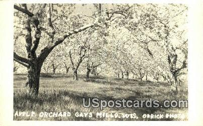 Apple Orchard - Gays Mill, Wisconsin WI Postcard