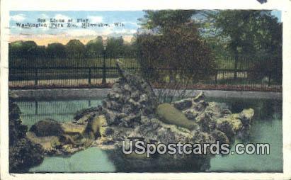 Sea Lions at Play, Washington Park Zoo - MIlwaukee, Wisconsin WI Postcard