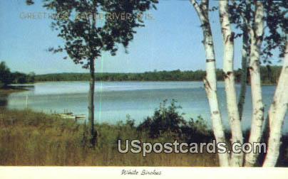 White Birches - Misc, Wisconsin WI Postcard