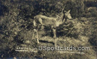 Real Photo - Woodruff, Wisconsin WI Postcard