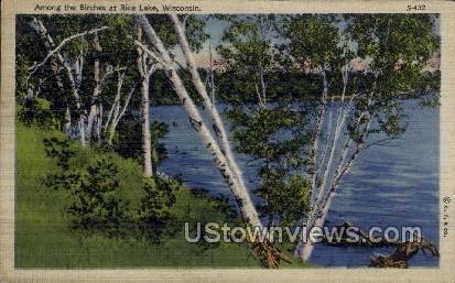 Birches At Rice Lake - Wisconsin WI Postcard