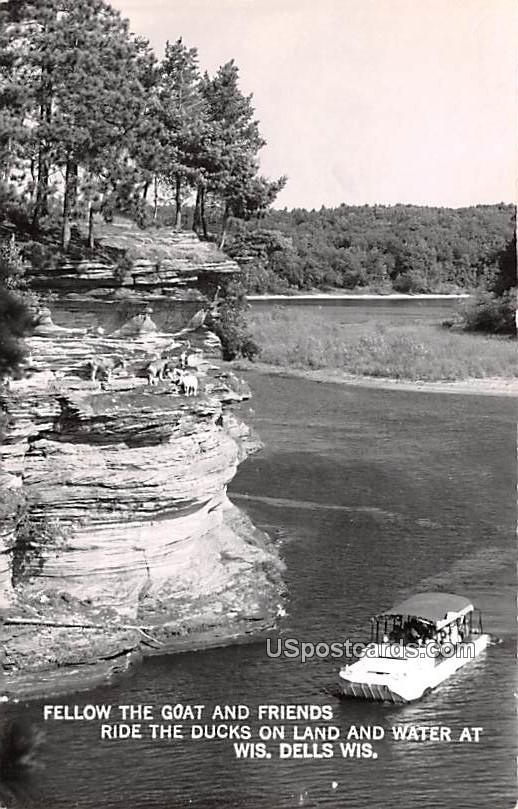 Fellow the Goat and Friends Ride the Ducks on Land and Water - Wisconsin Dells Postcards, Wisconsin WI Postcard