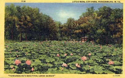 City Park - Parkersburg, West Virginia WV Postcard