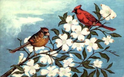 Cardinal & Dogwood - MIsc, West Virginia WV Postcard
