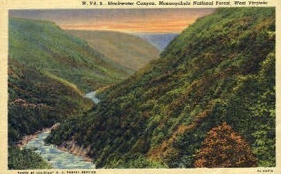 Blackwater Canyon  - Monongahela National Forest, West Virginia WV Postcard