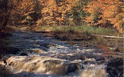 Cheat River  - Elkins, West Virginia WV Postcard