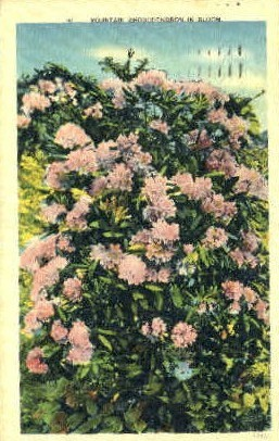 Mountain Rhododendron  - MIsc, West Virginia WV Postcard