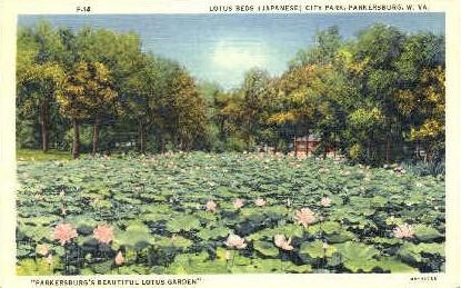 Lotus Beds City Park - Parkersburg, West Virginia WV Postcard