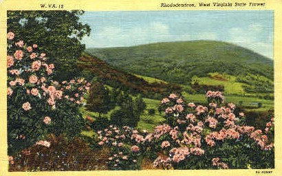 Rhododendron, State Flower - MIsc, West Virginia WV Postcard