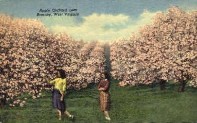 Apple Orchard - Romney, West Virginia WV Postcard
