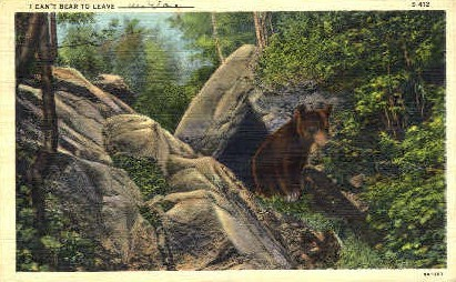 Bear - MIsc, West Virginia WV Postcard