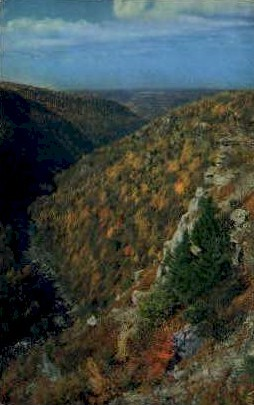 Monongahela National Forest  - Davis, West Virginia WV Postcard