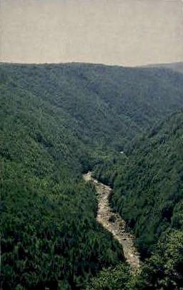Blackwater River - Davis, West Virginia WV Postcard